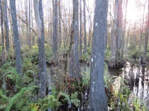 Health benefits of walking in the woods
